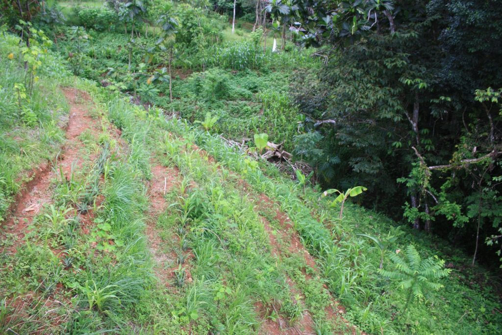 Permaculture design, swales